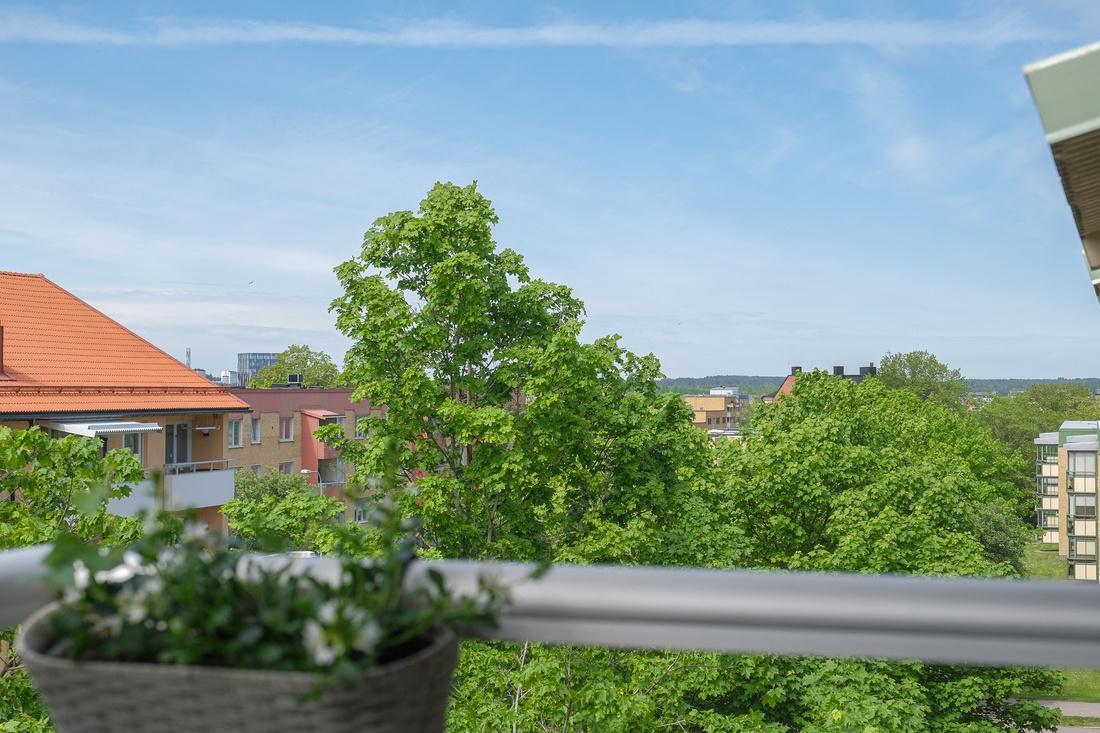 Utsikt över trädtopparna mot Gävle strand...